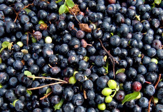 Bär ligger i Sveriges ekologiska exporttopp.