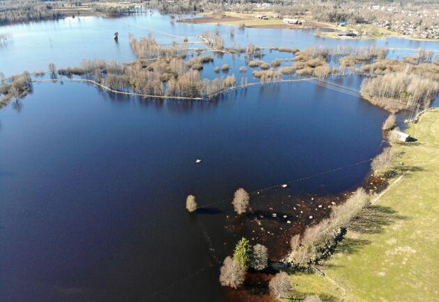 För första gången på 39 år brast invallningen som håller bort vattnen från Helige å från markerna. 70 hektar svämmades över och man har mätt upp vattendjupet till 1,85 meter på sina ställen.