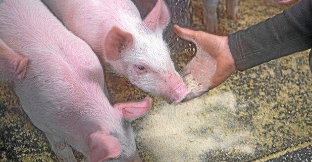 Lägre pris, skambilligt, och högre inkomst leder till högre konsumtion. Det skriver grisbonden Jeanette Elander i ett debattinlägg.