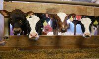 Stöd för märkning för djurvälfärd i EU