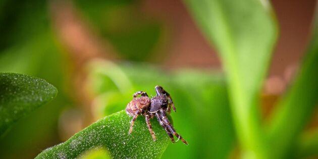 Därför är spindeln din ekologiska superhjälte