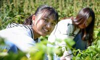 Ekogårdar lockar utländska volontärer