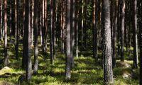 EU:s jordbruksministrar: Skogen är inte EU-politik