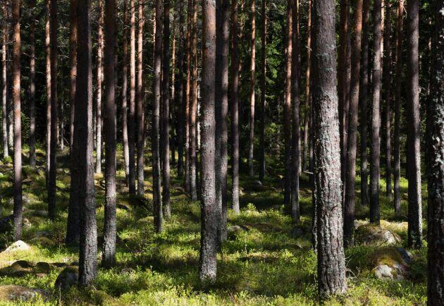 Det finns ingen gemensam skogspolitik i EU, det har unionens jordbruksministrar slagit fast.