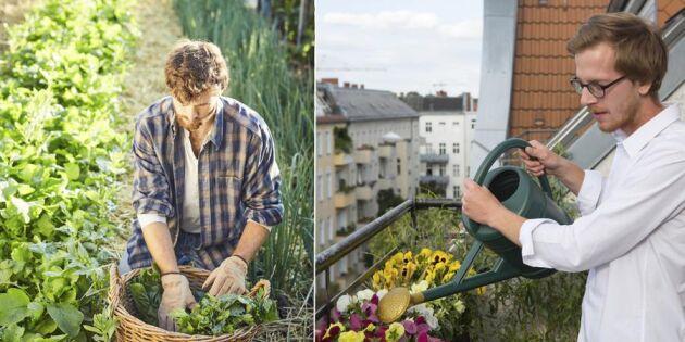 Nytt projekt: Glömda villaträdgårdar hittar nya odlare