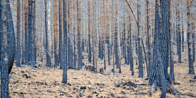 Osäkert om storreservat efter bränderna