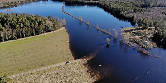 Vildsvinens verk – 70 hektar översvämmade