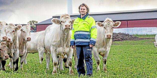 Så ska köttet på gotländska gårdarna bli fossilfritt