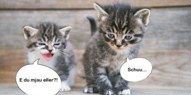 Vilken dialekt jamar din katt på? Det undersöker forskare!