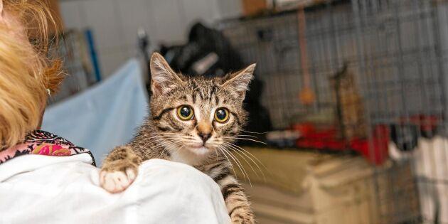 Hittekattens vecka: Så tar du hand om en hemlös katt!