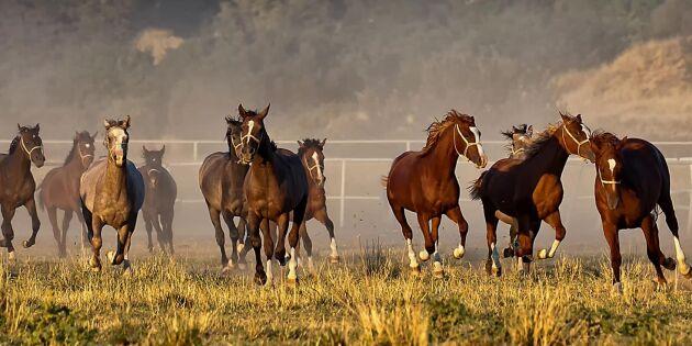 Hästnäringen växer sig allt större
