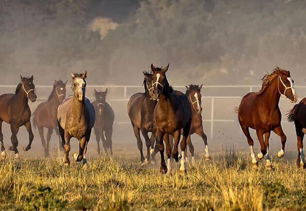 Hästnäringen omsätter 72 miljarder och sysselsättningen i branschen ökar, visar nya siffror.