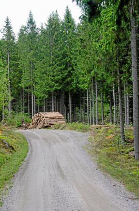 Den skogsägare som är certifierad får i södra Sverige uppåt tio kronor per kubikmeter extra för virket. Certifiering enligt både PEFC och FSC ger uppåt tjugo kronor extra. Men i många områden ger certifieringen inte något tillägg alls.