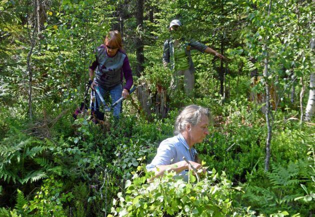 Det rådde full aktivitet på fredagens exkursion. Mathilda Clausén-Wingårdh var en av dem som jobbade på med projektet att göra skogen lite vackrare.