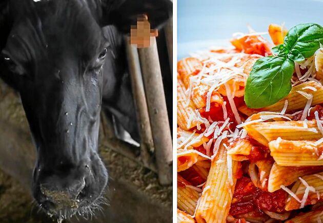 Priset för parmesanosten på vår pasta, betalas av mjölkkorna på italienska gårdar.