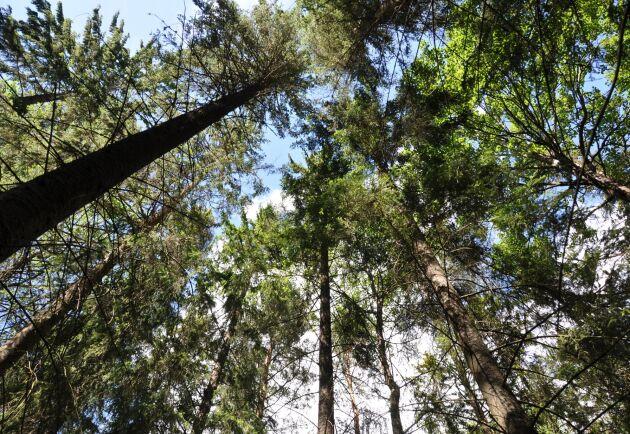 Medel för att skydda mer natur ingår i den budget för 2021 som presenteras i sin helhet om en vecka.