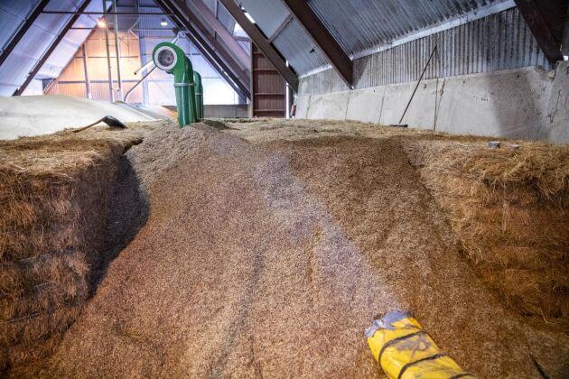 Drygt 40 kubikmeter kernza ligger nu på lager i Högestad.