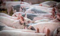 Lättnader på gång för foderförbud