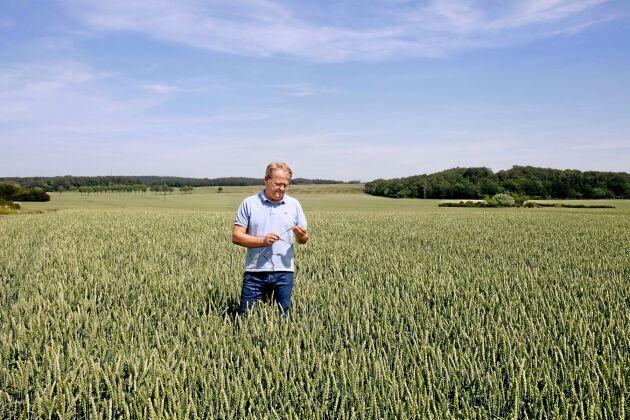 Johan Karlzén står i det största vetefältet på egendomarna - 114 hektar. Beståndet ser bra ut, men han vågar av erfarenhet inte ta ut någon seger i förskott. Hans önskan framåt är 70 millimeter regn och inte alltför höga temperaturer.