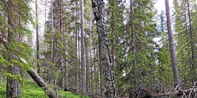 Sveaskog kritiseras för sin naturvärdesbedömning
