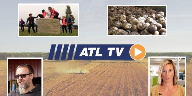 ATL TV: Norrlandsbonden som tar foder från 200 skiften