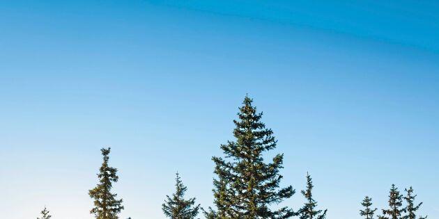 Svårt att köpa privatägd skog