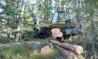 Svensk skogsplan inte utdömd än