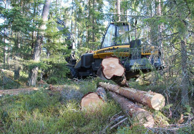 Vilken referensnivå som ska gälla för mätningen av den svenska skogens klimatbidrag är fortfarande oklart.