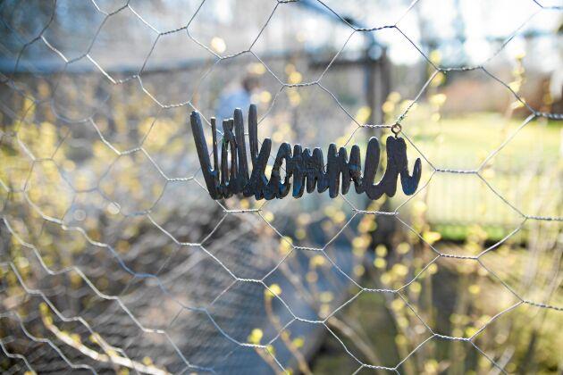 Välkommen till hönsgården på Stämpelgatan. Foto: Pia Gyllin