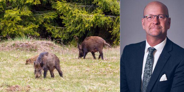 KD: Belöna jaktlag som skjuter vildsvin