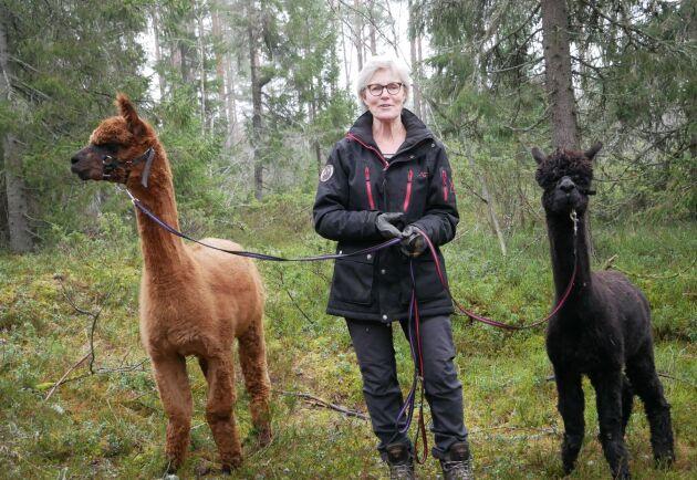 Tillsammans med sin make införskaffades de första alpackorna till gården 2006. I dag bor 35 alpackor på gården. På bilden syns företagaren Catrin Åsén tillsammans med Bernie och Nova.