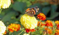 Ny handlingsplan stärker skyddet av pollinerande insekter