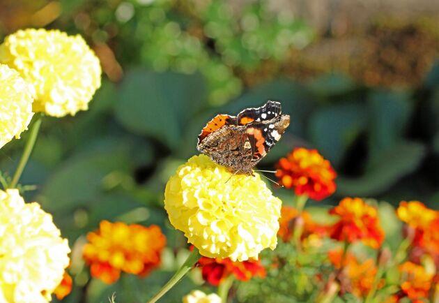 Regeringens reviderade handlingsplan för växtskyddsmedel stärker skyddet av pollinerande insekter.