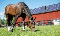ATL TV: Solceller ger halva årsförbrukningen