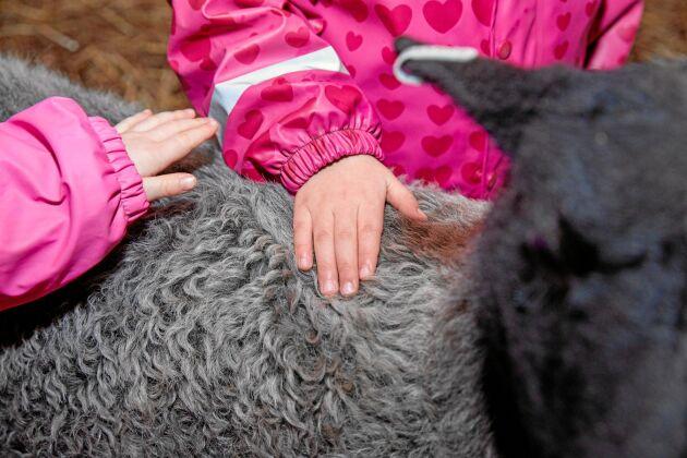 Att få gosa med och klappa djuren gör barnen lugna och glada.
