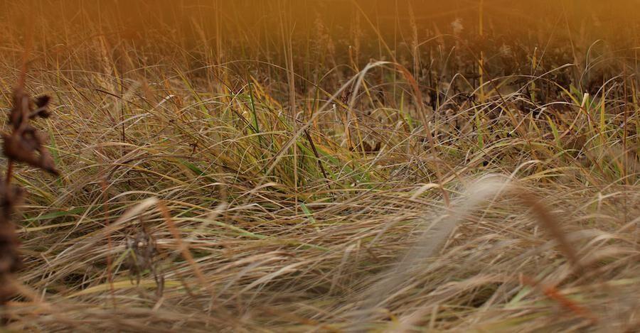 Vildvuxet gräs kan bli ett gömställe för sorkar, som kan ställa till det i trädgården.