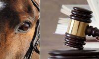 Prejudicerande dom kring hästköp