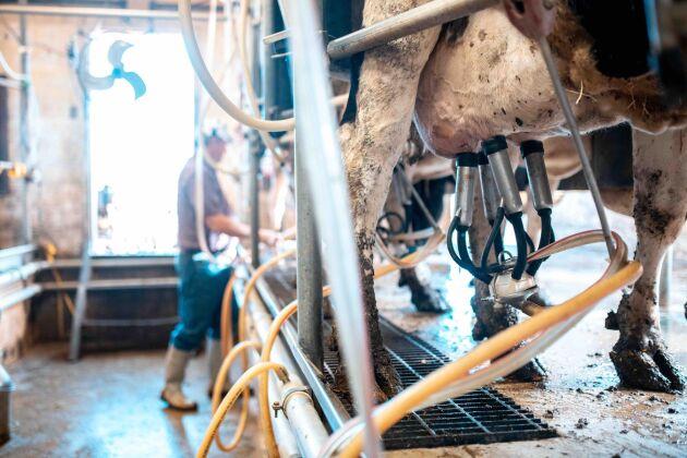 Andelen svenskproducerade mejerivaror sjönk med 2,5 procent i fjol.