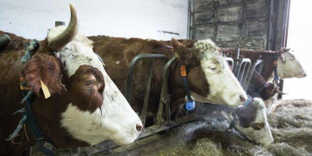 Personalen ökar –djurkontrollerna minskar