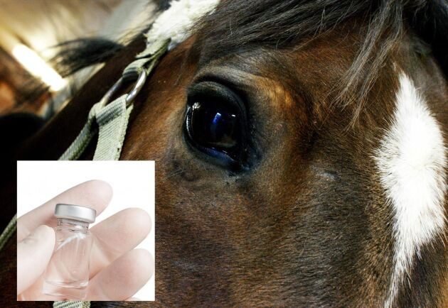 Efter flera års forskning har SLU i samarbete med Karolinska Institutet och Animal Health Trust i Storbritannien fått fram ett vaccin mot kvarka.