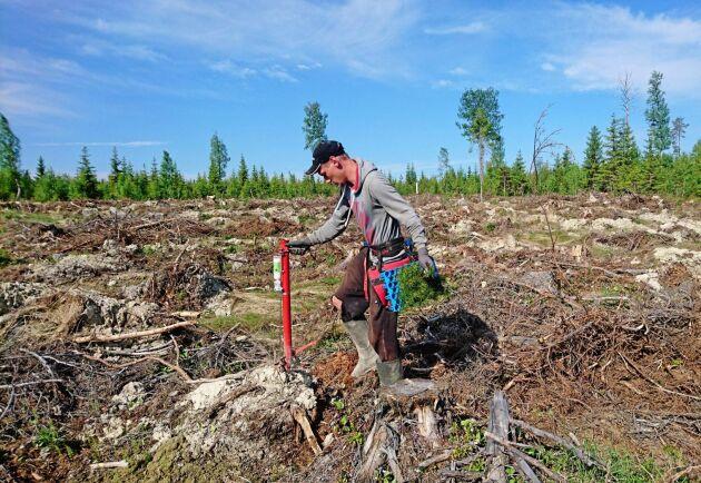 Utvärderingar av Skogforsk visar att efter tre växtsäsonger hade plantor som fått växtnäringen mer än dubbelt så hög torrvikt som de som inte gödslats.