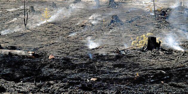 Biolog gläds åt bränderna: Behövs mer kaos