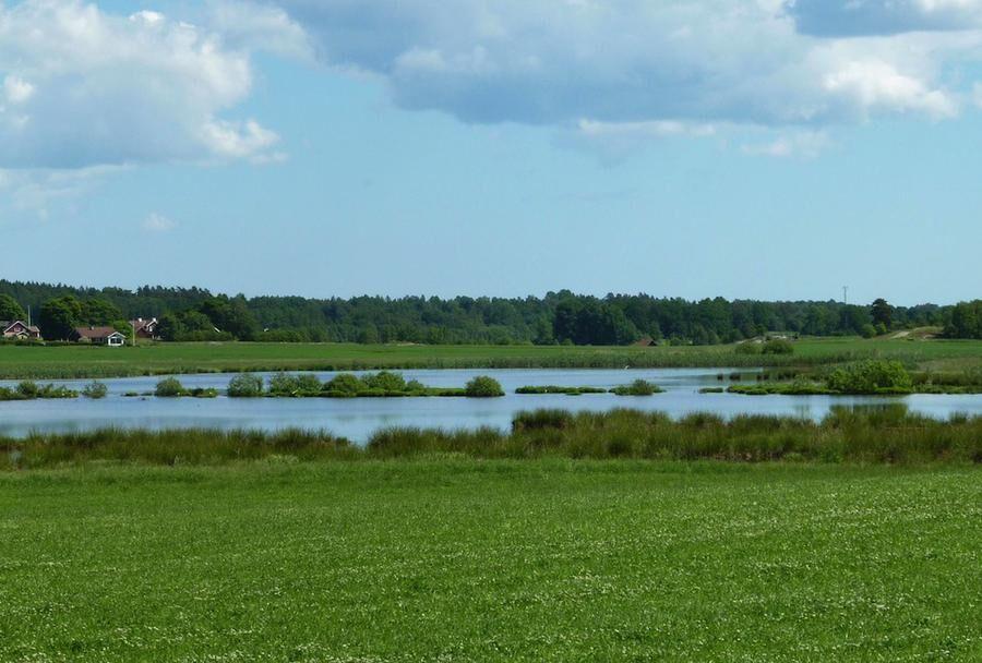 Sugen på att anlägga en våtmark? Foto: SÖREN ERIKSSON