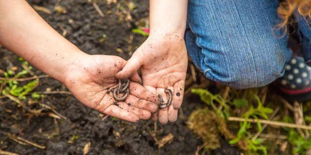 Daggmasken - inte bara en jordförbättrare