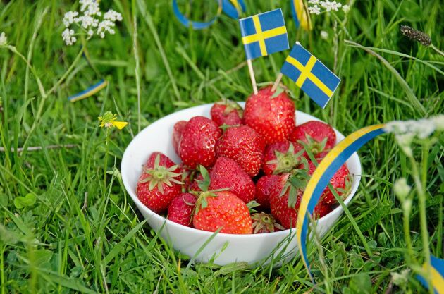 Lär dig känna igen svenska jordgubbar så du köper rätt!
