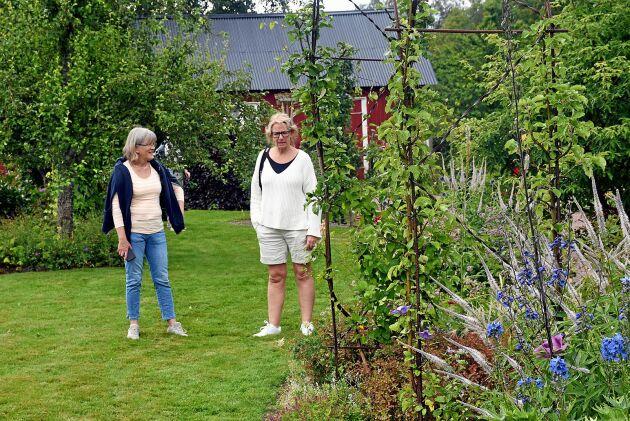 """Marita Åhrby, 54 år, och Anne-Lie Sjögren, 53 år, har åkt från Vårgårda för att besöka Katarina Olssons trädgård utanför Sollebrunn. """"Det är Anne-Lie som är experten, men det här är en fin trädgård"""", säger Marita Åhrby. """"Jag är ordförande i Vårgårda Trädgårdsförening och är mycket intresserad. Jag beundrar Katrinas förmåga att kunna kombinera perenner, och tycker om att titta på henne spaljerade fruktträd. Jag har varit i trädgården en gång tidigare men det här är första gången under Öppen Trädgård"""", säger Anne-Lie Sjögren."""