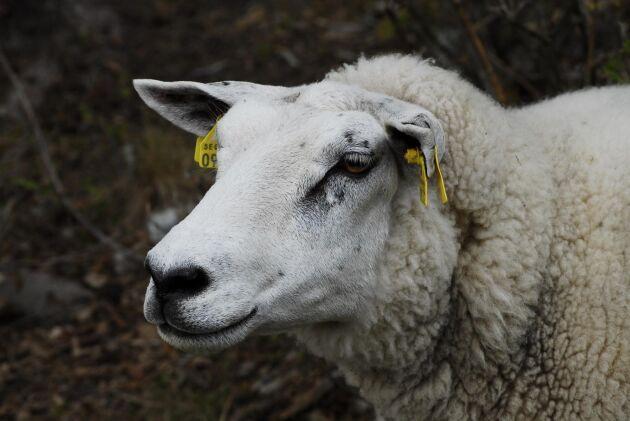 Tackan som utsattes för övergreppet blev så illa däran att djuret fick avlivas på platsen. (arkivfoto)