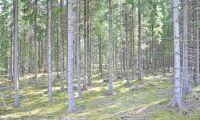 Skogsägare fick rätt om skogskontot