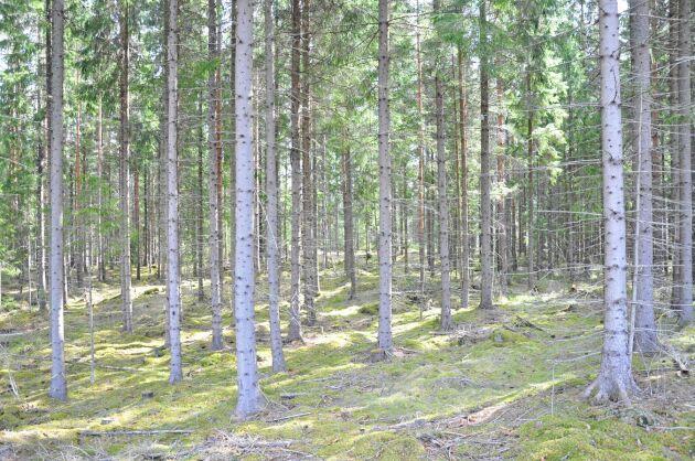 LRF och Skatteverkets Allmänna ombud har fått rätt, Skatteverkets tolkning att det inte går att överlåta skogskonton från dödsbon utan att den nya ägaren får betala skatt, är inte okej. Skatteverket har valt att överklaga beslutet till Högsta förvaltningsdomstolen.
