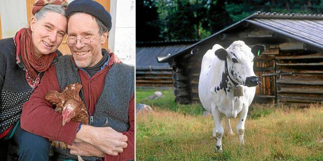 Mandelmanns brott mot EU-reglerna räddade gårdens kor